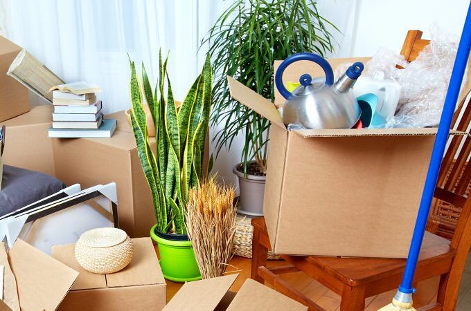 Packers and Movers Shift Plants