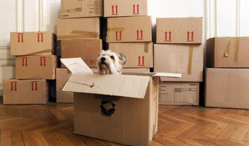 Smooth Pet Relocation Overseas